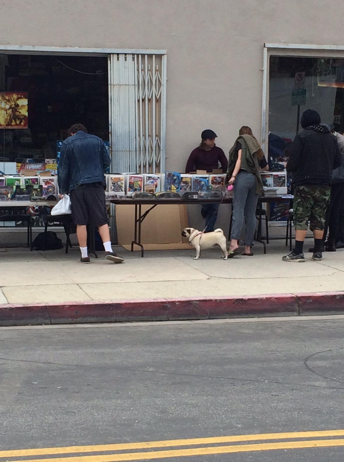 Comic book lovin' pug